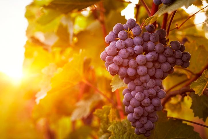 Conheça os benefícios da uva