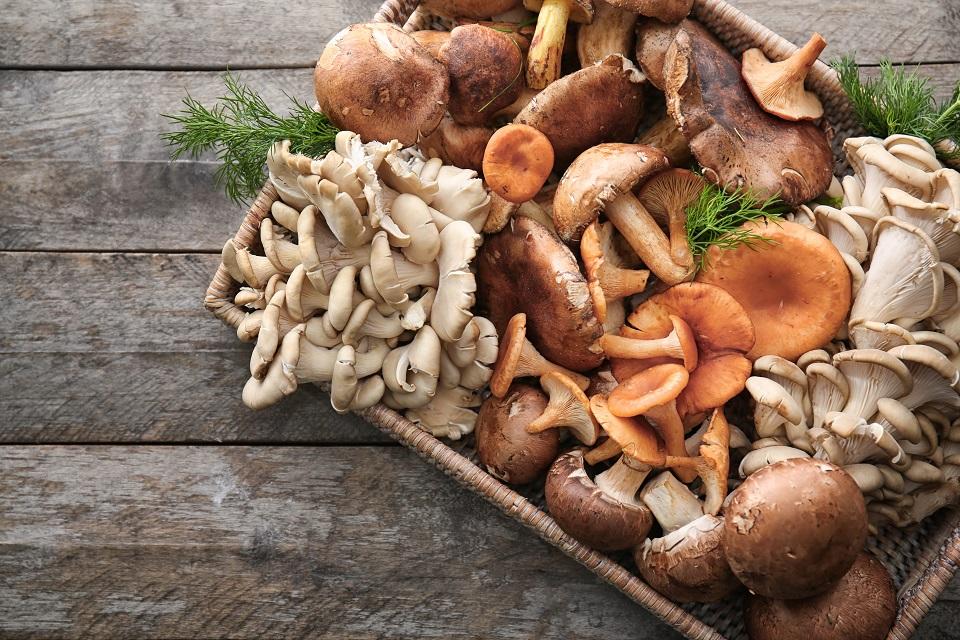 Cogumelos: benefícios e dicas para consumir
